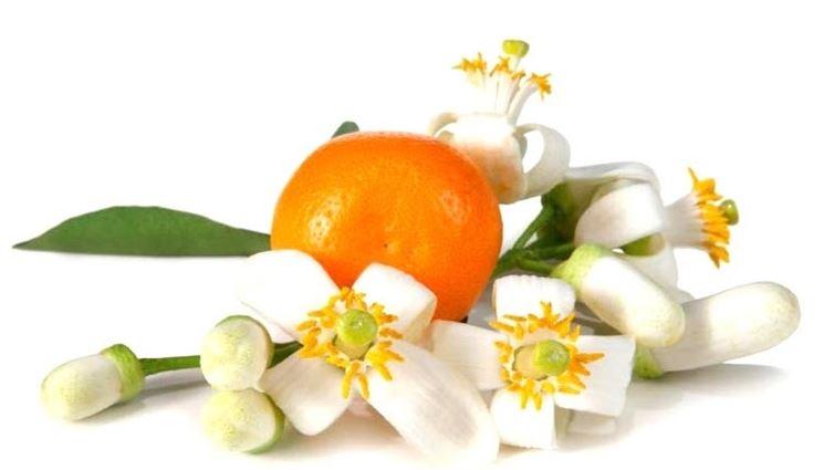 Fiori di arancio amaro (Citrus aurantium)