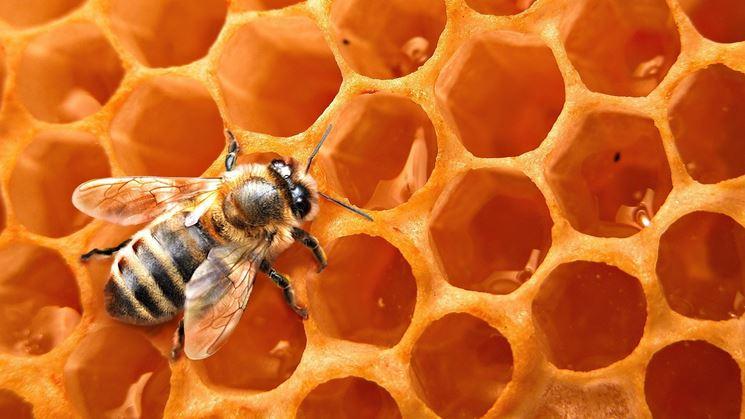 Un'ape al lavoro nel suo alveare