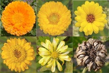 fiori per tintute madri