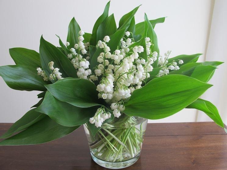 Fiori di mughetto fiori di piante for Tipi di fiori