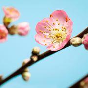 fioripesco1