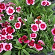 fiori di campo primaverili