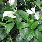 piante con la i