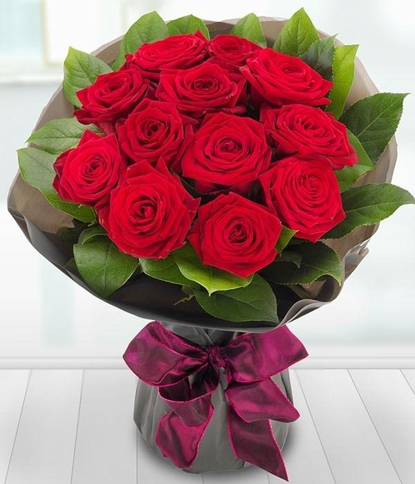 Rosa Rossa Fiore Fiori Di Piante Fiore Di Rosa Rosso