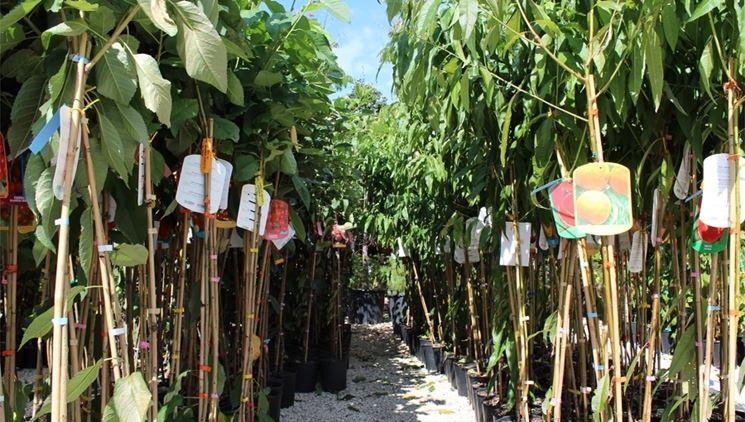Acquisto piante online fiori per cerimonie come for Giardinaggio e fiori