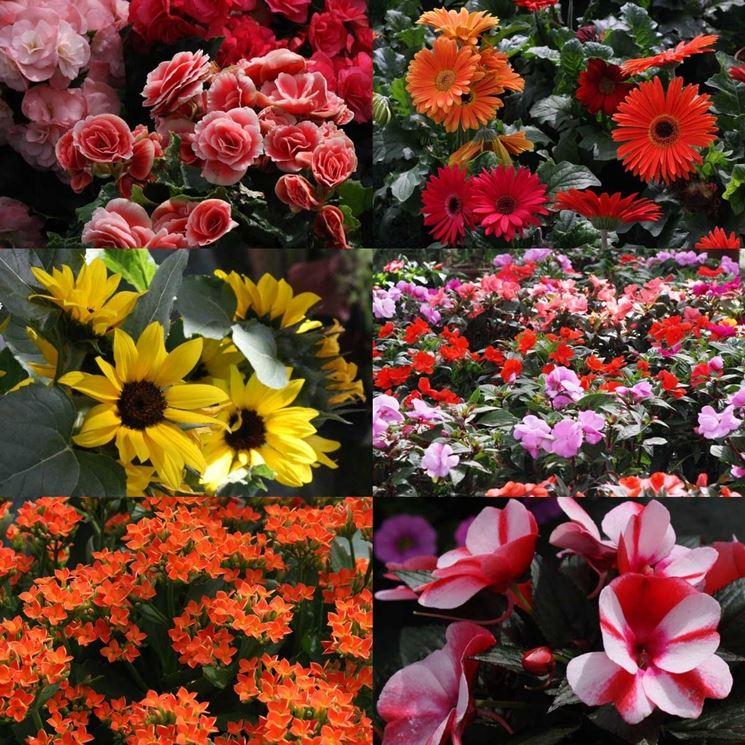 acquisto piante online fiori per cerimonie come