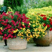 piante da giardino in grandi vasi