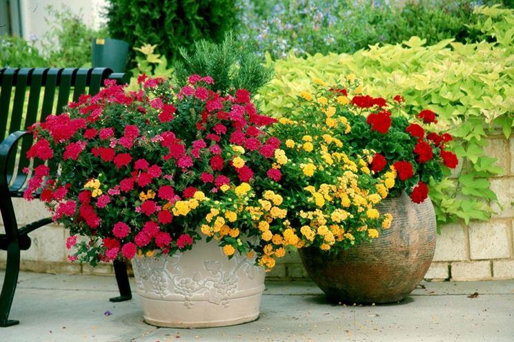 comprare piante fiori per cerimonie comprare piante