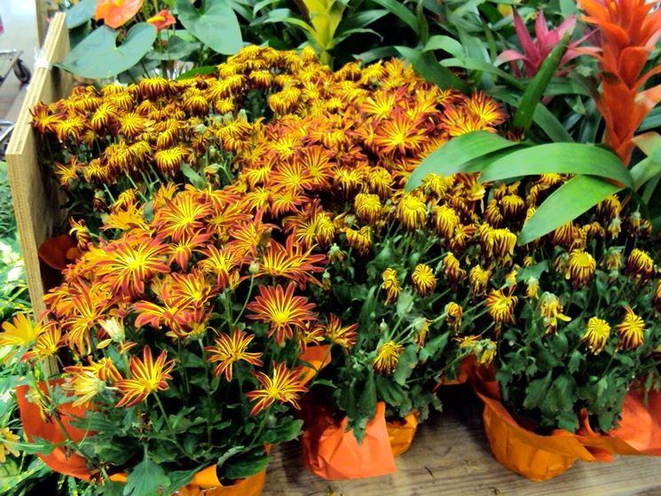 Comprare piante fiori per cerimonie comprare piante for Piante di lamponi acquisto