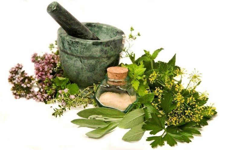 le piante aromatiche al servizio della medicina omeapatica