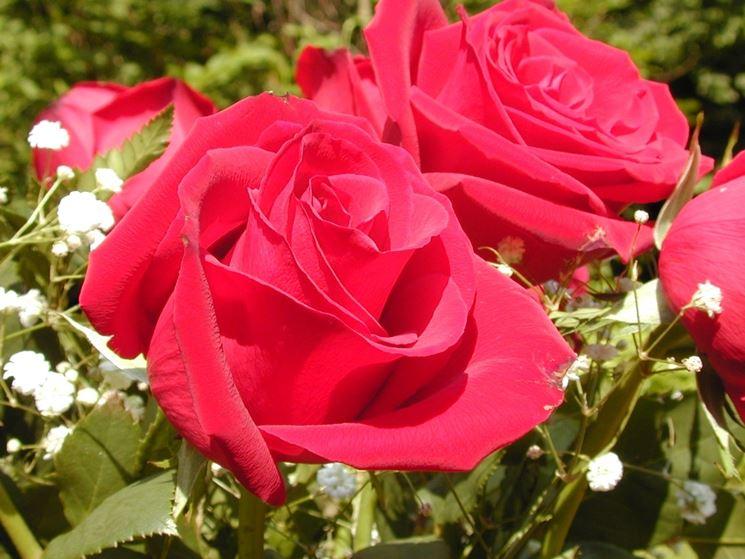 Fiori da esterno fiori per cerimonie come scegliere i fiori da esterno - Fiori da esterno primaverili ...