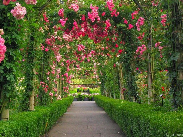 Fiori da esterno fiori per cerimonie come scegliere i - Grossi fiori da giardino ...