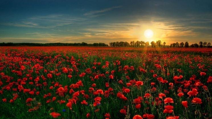 Le stagioni preferite dai fiori