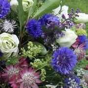 fiori giugno