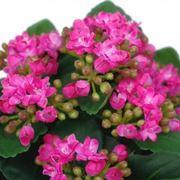 Una pianta fiorita in vaso