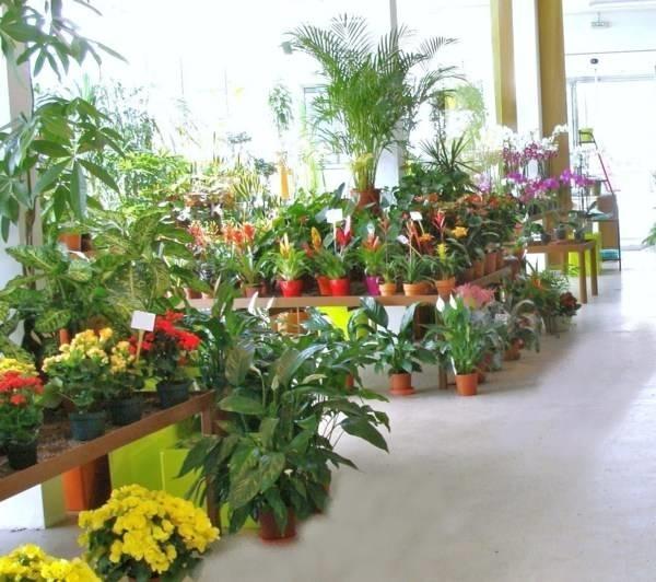 Fiori in vaso fiori per cerimonie fiori in vaso quali for Fiori da vaso per esterno