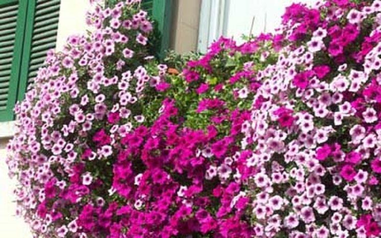 Fiori primavera - Fiori per cerimonie - Fiori di primavera