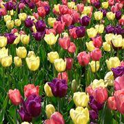immagini fiori primavera