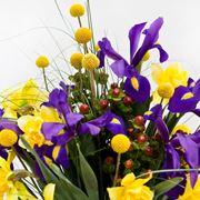 bulbose di iris e narciso