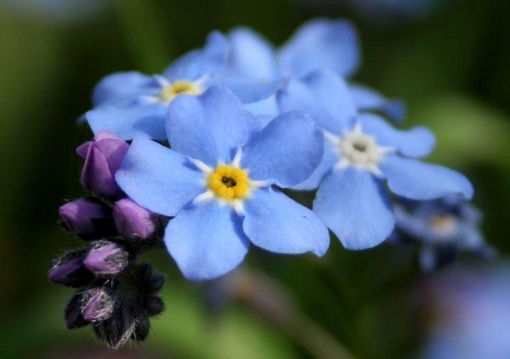 Matrimonio Fiori Azzurri : I fiori azzurri per cerimonie colore azzurro