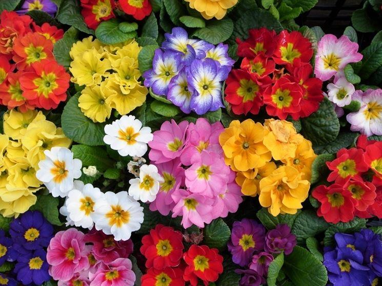 I fiori primaverili fiori per cerimonie fiori primaverili - Fiori primaverili ...
