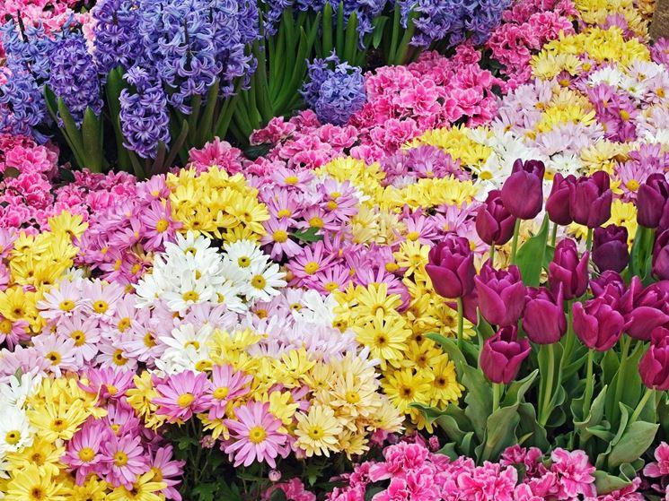 Tanti fiori colorati di generi diversi venduti online