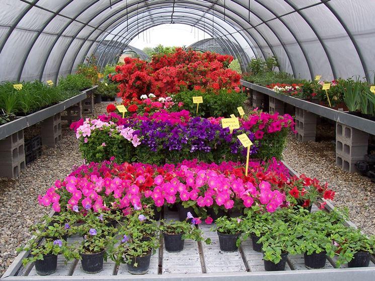 Un vivaio all'ingrosso di piante e fiori