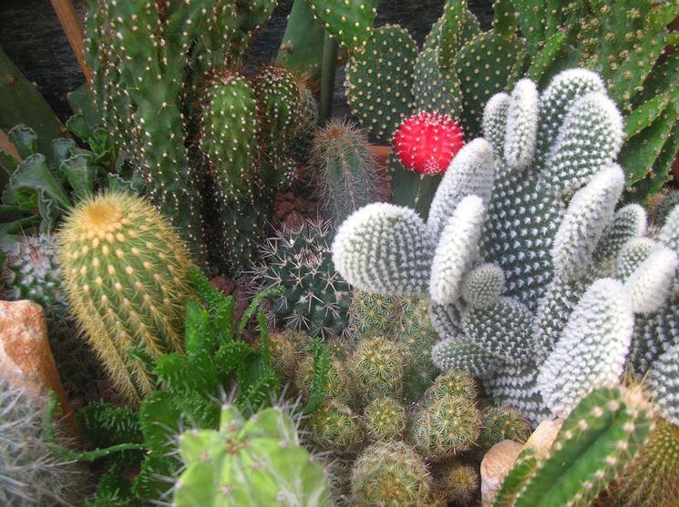 Le piante grasse sono tra le più vendute online
