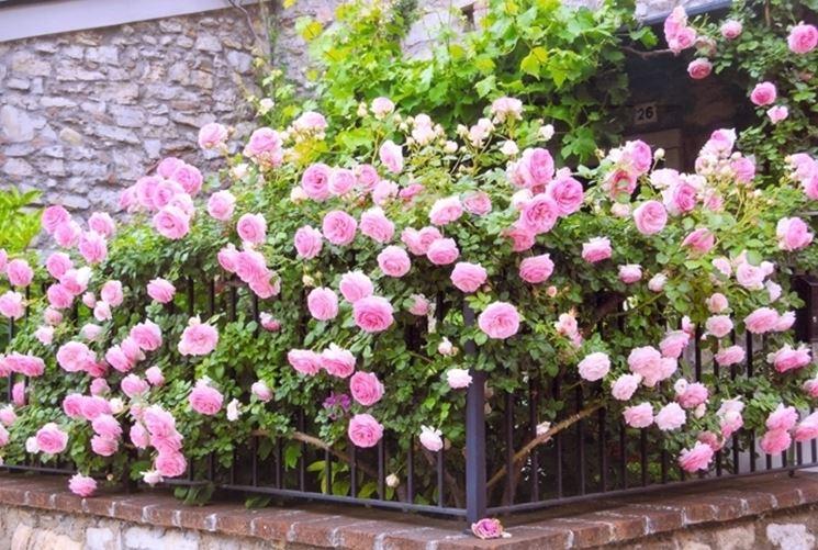 Piante vendita online fiori per cerimonie comprare for Piante on line
