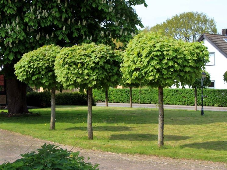 Vendita alberi on line fiori per cerimonie alberi on - Prezzi alberi da giardino ...