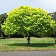 vendita alberi online