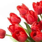 Composizione con tulipani rossi