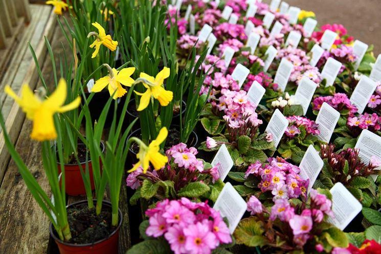 Vendita online piante fiori per cerimonie piante for Piante vendita