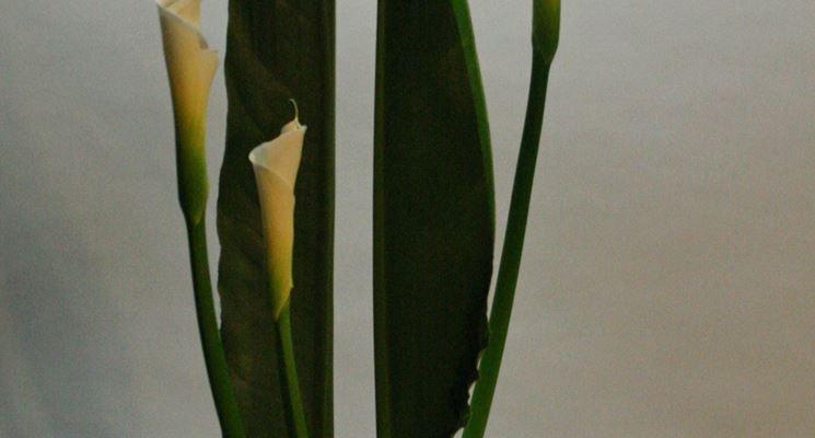 Esempio di Ikebana
