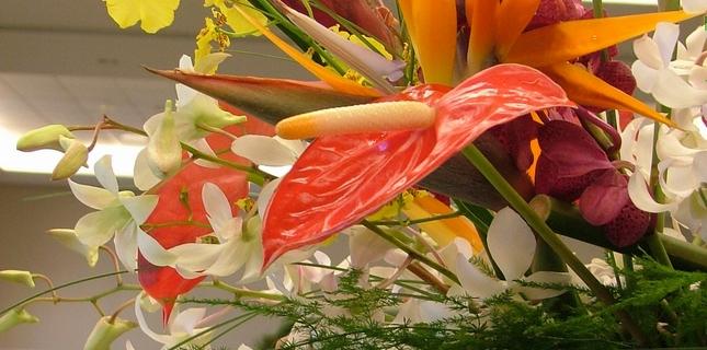 <h6>Composizioni di fiori</h6>Le composizioni di fiori permettono di portare un tocco di eleganza duratura e naturale all'interno della casa, meglio se realizzate seguendo precise norme compositive.