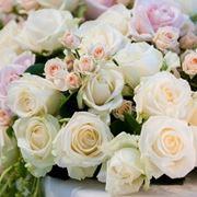 Rose in vari colori