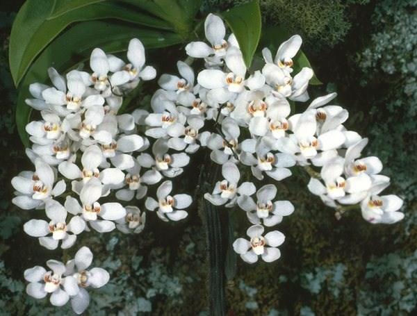 Top Composizioni floreali per matrimoni - Regalare fiori  PU88