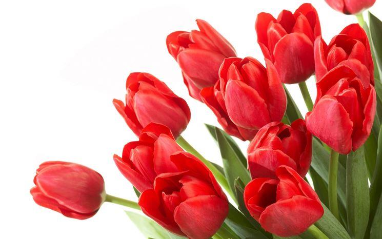 dichiara il tuo amore con i tulipani