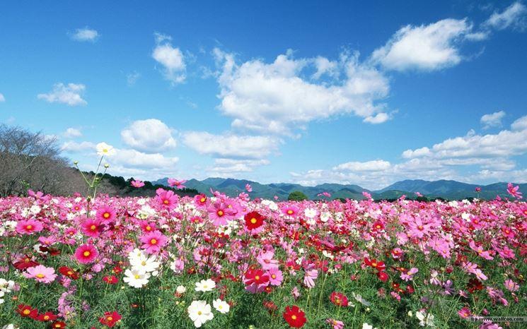 la meraviglia dei fiori di campo
