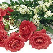 romantico fascio di rose