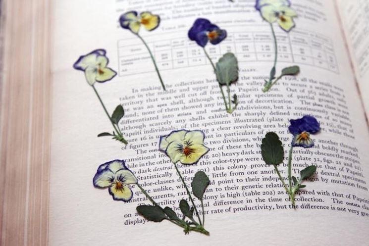 Fiori essiccati in un libro
