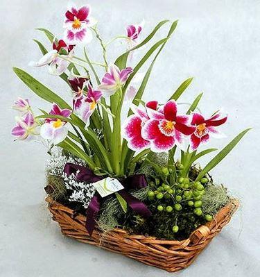 Regalare i fiori