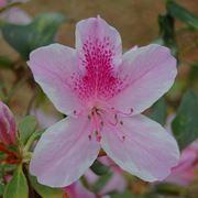 Il fiore dell