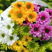 Crisantemo significato significato fiori crisantemo for Fiori perenni pieno sole