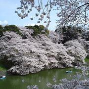 Meravigliosi fiori di ciliegio a Tokio
