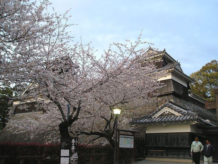 Fiori al Castello di Kumamoto