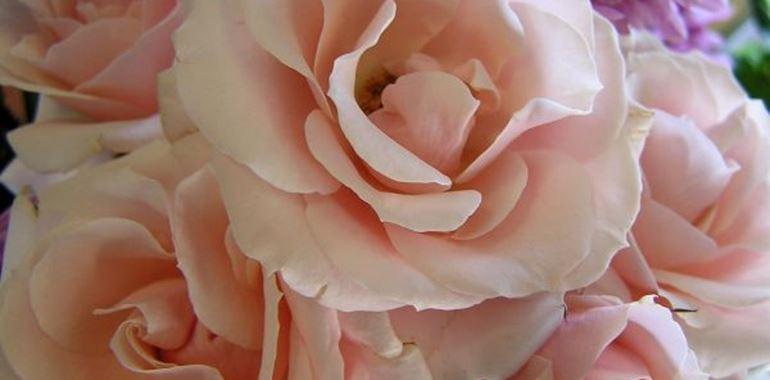 <h6>Fiori dell'amicizia</h6>Le principali specie che nel linguaggio dei fiori si associano all'amicizia, per dei regali alle persone che riteniamo pi� importanti