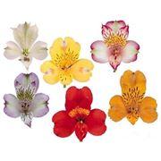 orchidee con colori e significati