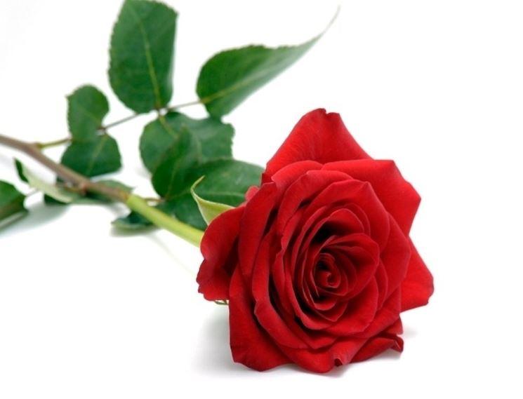 https://www.giardinaggio.org/fiori/significato-fiori/linguaggio-dei-fiori-rosa_NG1.jpg