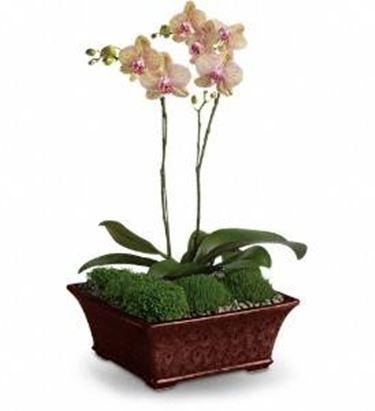 composizione orchidea